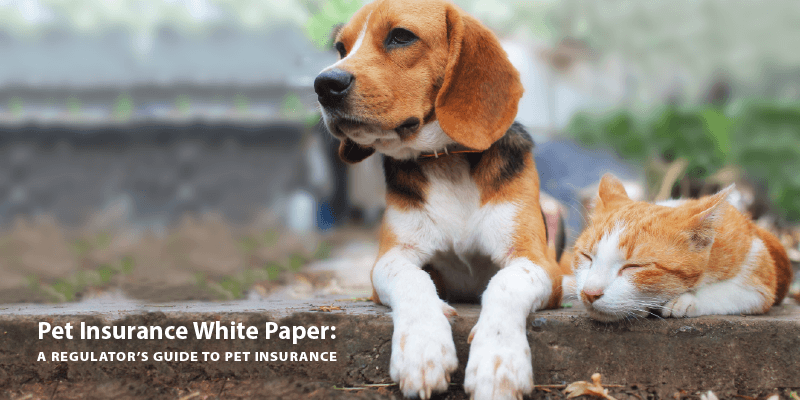 Pet Insurance White Paper: A Regulator's Guide to Pet Insurance