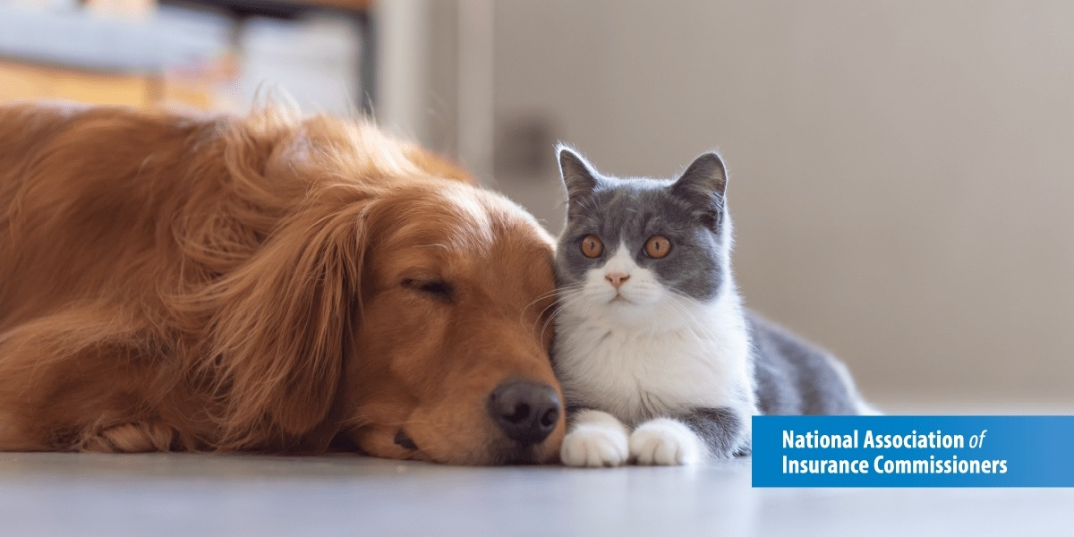 Cat sits next to dog as dog sleeps